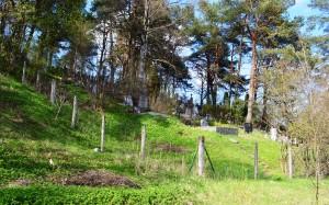 Daniliškių_kapinės